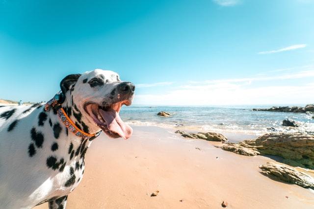 【まとめ】動物も熱中症になります|ペットを熱中症から守るために知っておくべきこと